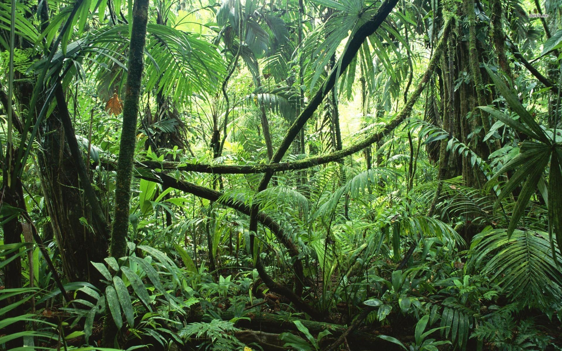 Лианы- Купить многолетние лианы для сада- Питомник Калина